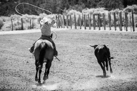 boy roping steer-1