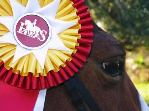 Houston Dressage Society Believes Kids Count