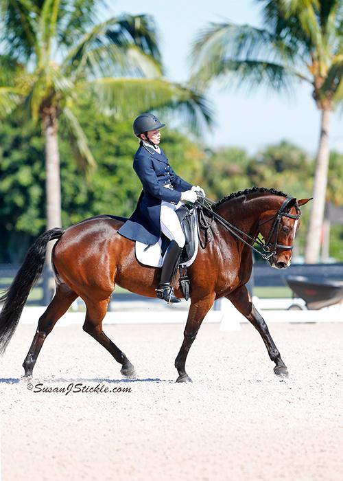 Gold Coast Dressage Association – July 2017 Newsletter